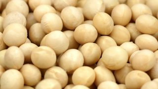 大豆イソフラボン 写真