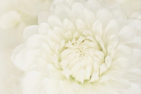 白い花 写真