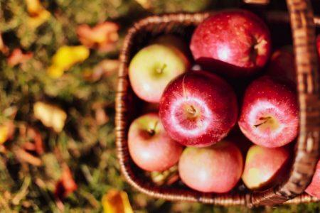 リンゴ 写真