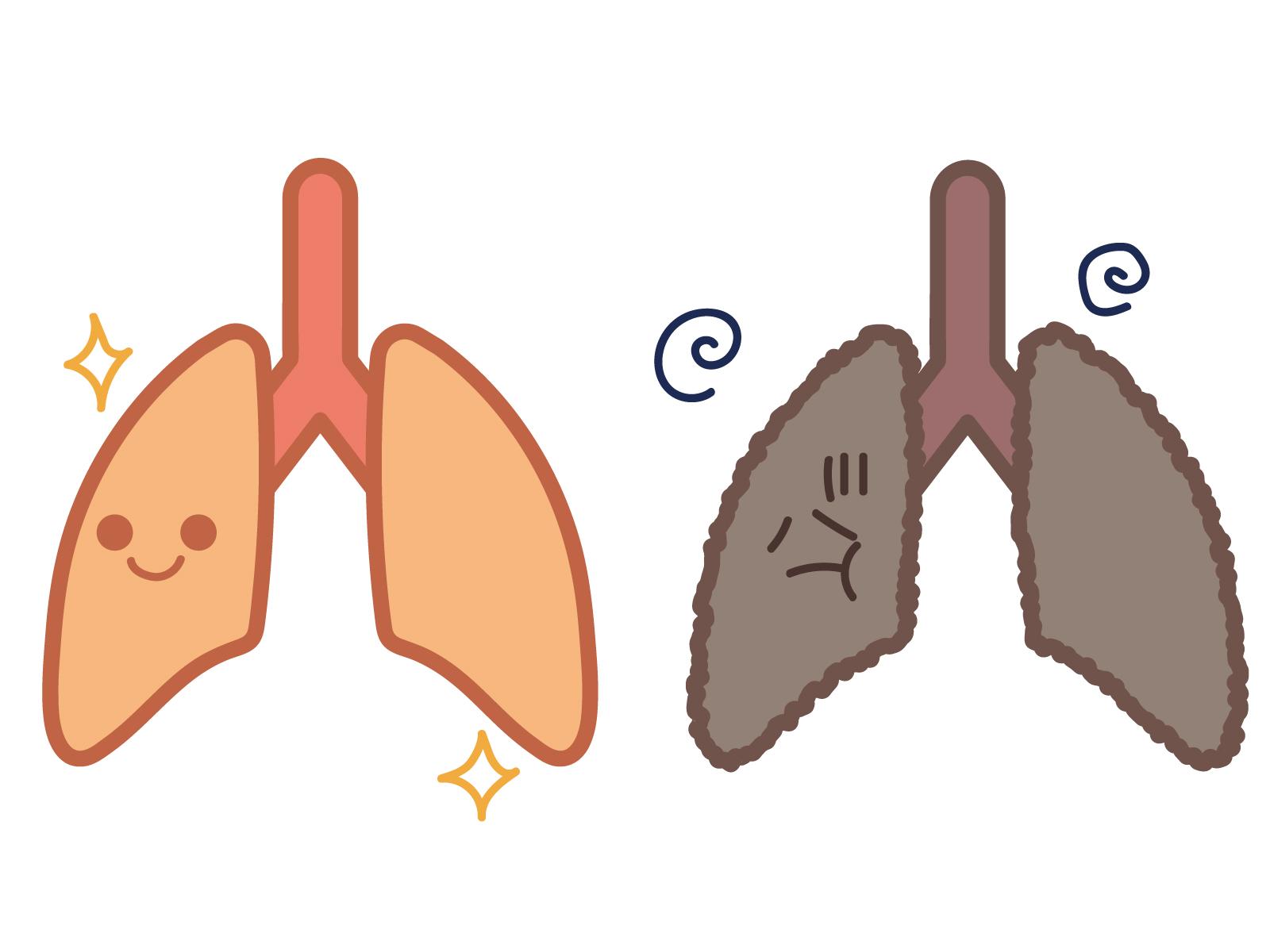 臓器 イラスト